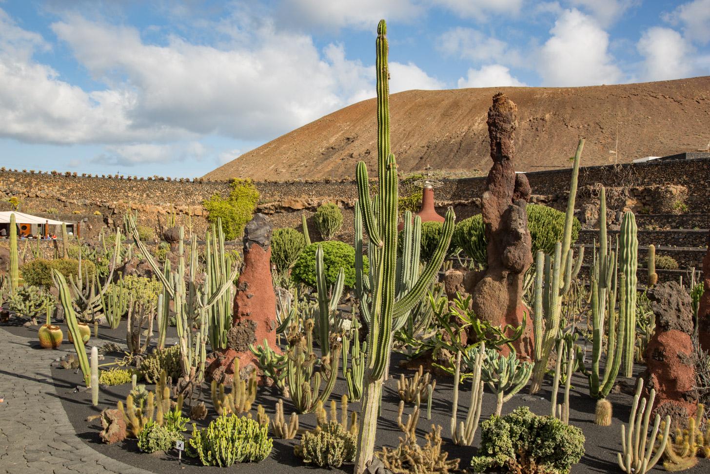 Jardin de Cactus, de prachtige cactustuin van Lanzarote